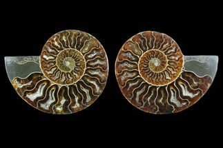 "Buy 3.65"" Sliced Ammonite Fossil (Pair) - Agatized - #123196"