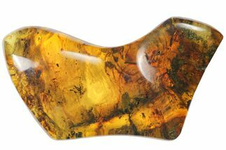"2.0""  Polished Chiapas Amber (7 grams) - Mexico For Sale, #114848"
