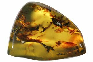 "1.3""  Polished Chiapas Amber (16 grams) - Mexico For Sale, #114869"