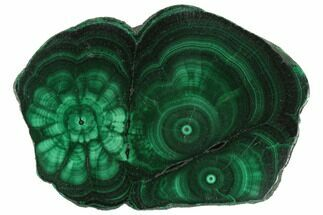 "Buy 2.6"" Polished Malachite Slice - Congo - #125713"