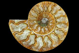 "3.35"" Agatized Ammonite Fossil (Half) - Madagascar For Sale, #125054"