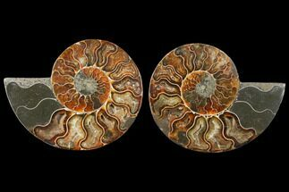 "4"" Sliced Ammonite Fossil (Pair) - Agatized For Sale, #125033"
