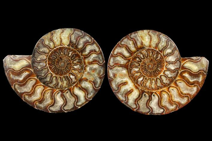 "7.85"" Agatized Ammonite Fossil (Pair) - Beautiful Preservation"