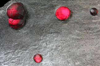 "Buy 4.6"" Plate of Six Large Red Embers Garnets in Graphite - Massachusetts - #127801"