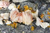 "7.6"" Cerussite, Wulfenite and Bladed Barite on Galena - Morocco - #128072-4"