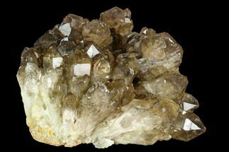"6.5"" Smoky Citrine Crystal Cluster - Congo For Sale, #128387"