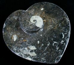 "Buy 6.5"" Heart Shaped Fossil Goniatite Dish - #8995"