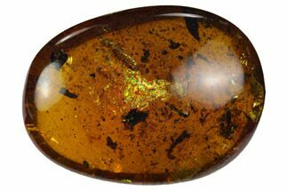 Buy Detailed Fossil Beetle & Two Ants In Amber - Myanmar - #128890