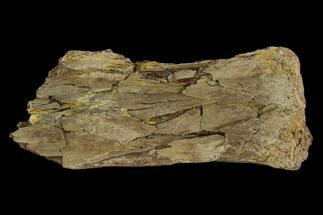 Pteranodon longiceps - Fossils For Sale - #115209