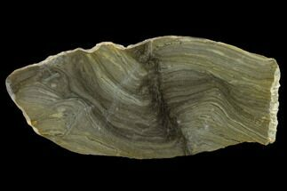 "Buy 6.4"" Polished Stromatolite (Kussiella) Slab - 1.88 Billion Years - #130624"