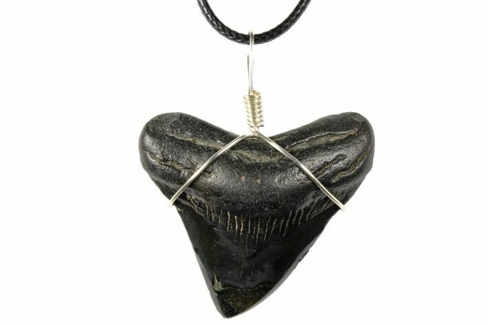 "1.85"" Fossil Megalodon Tooth Necklace"