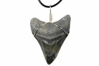 "2.2"" Fossil Megalodon Tooth Necklace For Sale, #130967"
