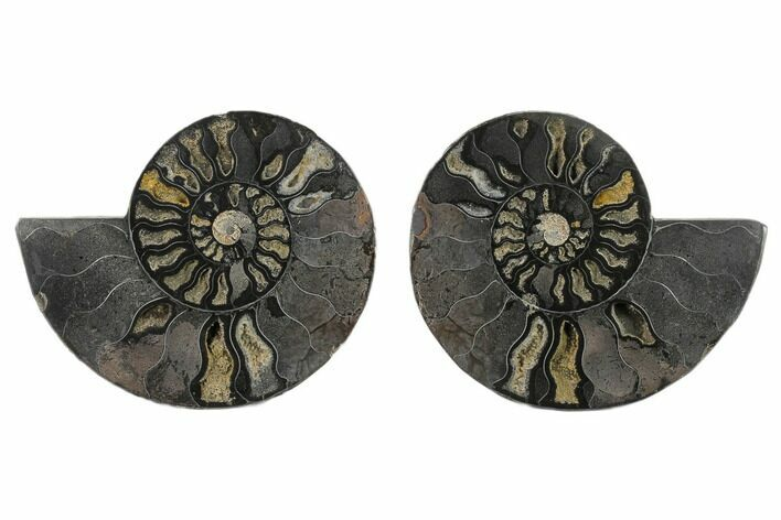 6.1 Split Black/Orange Ammonite Pair - Unusual Coloration