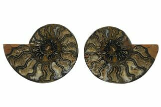 "Buy 4.35"" Cut/Polished Ammonite Fossil (Pair) - Unusual Black Color - #132571"