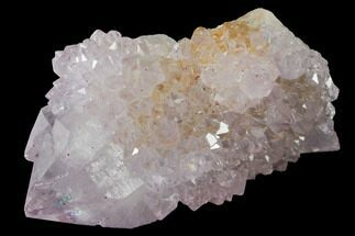 "1.3"" Cactus Quartz (Amethyst) Crystal - South Africa For Sale, #132455"