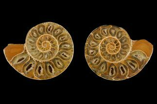 "Buy 3.4"" Cut & Polished Agatized Ammonite Fossil (Pair)- Jurassic - #131710"
