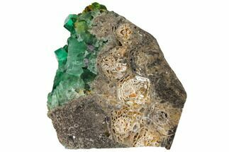 "Buy 2.95"" Fluorite and Galena on Fossil Coral (Actinocyathus) - Rogerley Mine - #132988"