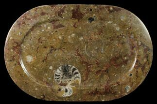 "17.6"" Fossil Orthoceras & Goniatite Oval Plate - Stoneware For Sale, #133580"