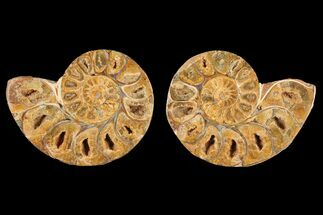 "Buy 3.1"" Cut & Polished Agatized Ammonite Fossil (Pair)- Jurassic - #131617"