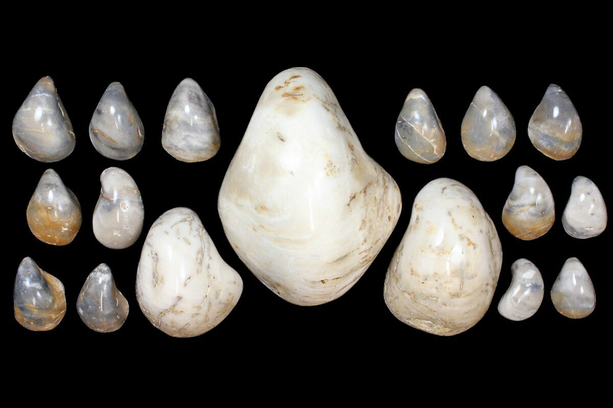 Wholesale Lot: Polished, Fossil Oyster Shells - ~175