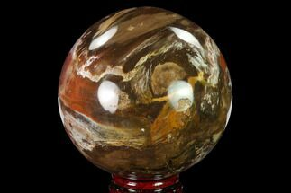 "Buy 3.6"" Colorful Petrified Wood Sphere - Madagascar - #135655"