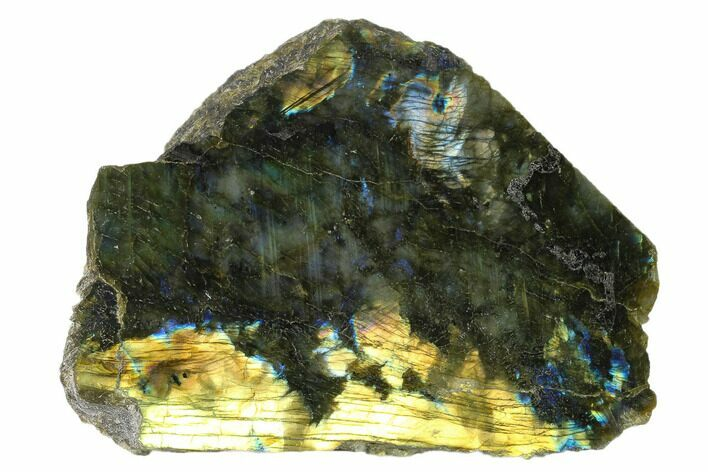 "5.5"" Wide, Single Side Polished Labradorite - Madagascar"