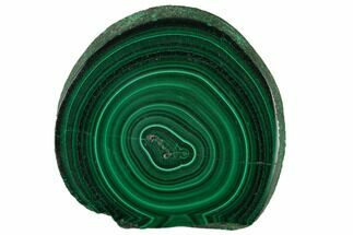 "Buy 1.62"" Polished Malachite Stalactite Slice - Congo - #137050"