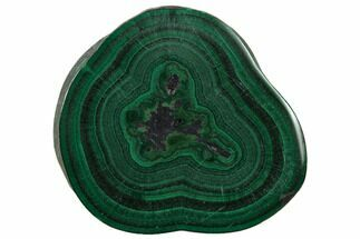 "Buy 1.19"" Polished Malachite Stalactite Slice - Congo - #137041"
