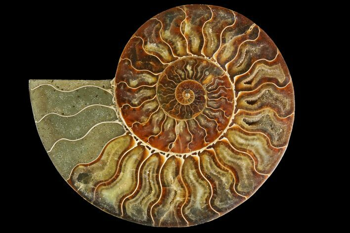 "5.4"" Agatized Ammonite Fossil (Half) - Madagascar"