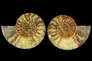 "5.6"" Agatized Ammonite Fossil (Pair) - Madagascar For Sale, #135266"