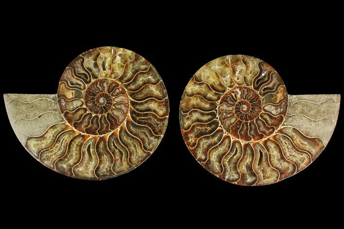 "6.6"" Agatized Ammonite Fossil (Pair) - Madagascar"