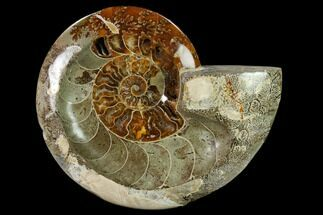 "6.8"" Wide Polished Fossil Ammonite ""Dish"" - Inlaid Ammonite For Sale, #137411"