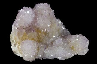 "2.4"" Cactus Quartz (Amethyst) Crystal Cluster - South Africa For Sale, #137774"