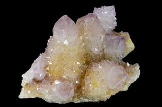 "Buy 2.9"" Cactus Quartz (Amethyst) Crystal Cluster - South Africa - #137800"