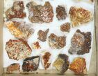 "Lot: 1.5 to 3"" Bladed Barite With Vanadinite - 36 Pieces - #138115-1"