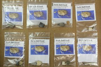 Buy Wholesale Lot: Bagged Fossil Turtle Shell Fragments - 8 Pieces - #138127