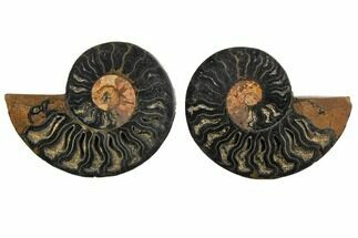 "Buy 4.05"" Cut/Polished Ammonite Fossil (Pair) - Unusual Black Color - #132595"