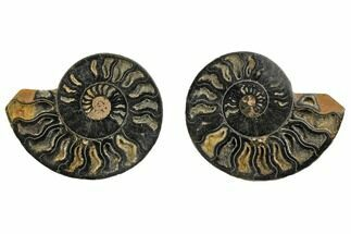 "Buy 4.2"" Cut/Polished Ammonite Fossil (Pair) - Unusual Black Color - #132616"