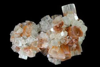 Aragonite - Fossils For Sale - #139254