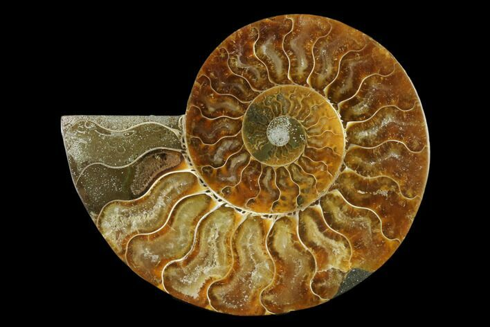"4.3"" Agatized Ammonite Fossil (Half) - Madagascar"