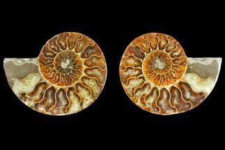 "4.65"" Agatized Ammonite Fossil (Pair) - Madagascar For Sale, #139730"