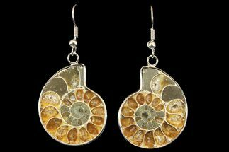 Buy Fossil Ammonite Earrings - 110 Million Years Old - #142864