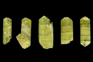 "Buy Five Yellow Apatite Crystals (over 1"") - Morocco - #143083"