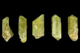 "Five Yellow Apatite Crystals (Over 1.4"") - Morocco For Sale, #143087"