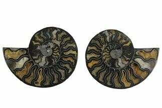 "Buy 4.9"" Cut/Polished Ammonite Fossil (Pair) - Unusual Black Color - #132697"