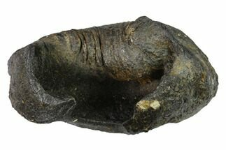 Whale (Unknown Species) - Fossils For Sale - #144906