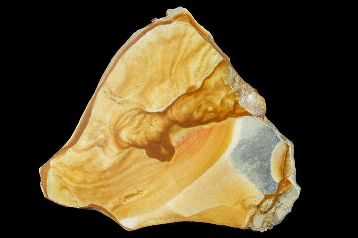 "3.1"" Polished Golden Picture Jasper Slab - Nevada"