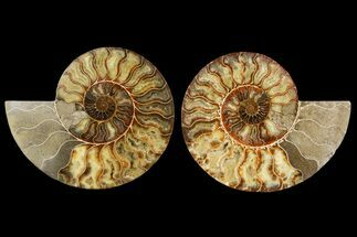 "Buy 8.75"" Agatized Ammonite Fossil (Pair) - Madagascar - #145219"