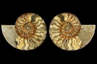 "8"" Agatized Ammonite Fossil (Pair) - Madagascar For Sale, #145223"