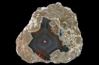 "Buy 3.2"" Polished Baker Ranch Thunderegg - New Mexico   - #145657"